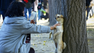 A woman takes a photo of her dog along a road in Beijing, China as Autumn brings the peak tourist season