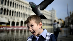 A pigeon lands on a boy's head in the flooded Piazza San Marco in Venice, Italy