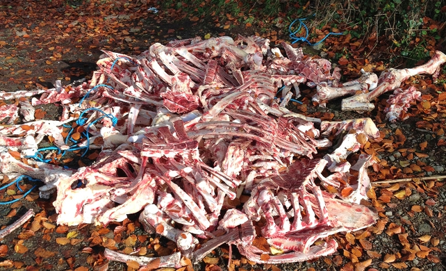 The six adult cattle carcasses were found near Ravensdale Forest earlier today