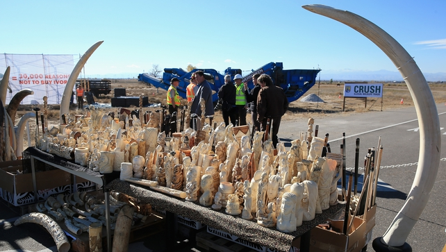 Six tonnes of ivory confiscated by the US Fish and Wildfire Service is displayed at the Rocky Mountain Arsenal Wildlife Refuge