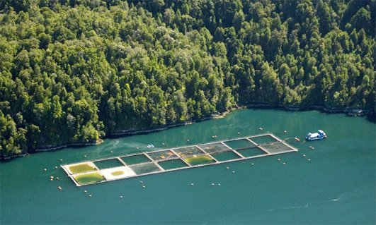 Chilean Aquaculture