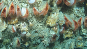The habitat was located in the Whittard Canyon (Images from NUI Galway-led cruise courtesy of the Marine Institute)