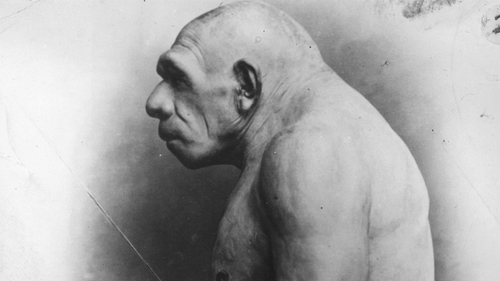 A model of a Neanderthal man constructed on the basis of excavated bones, at the Field Museum of Natural History in Chicago