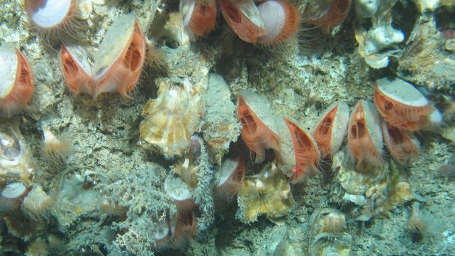 (Images from NUI Galway-led cruise courtesy of the Marine Institute)