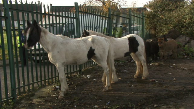 More than 3,000 horses have been impounded throughout the country this year