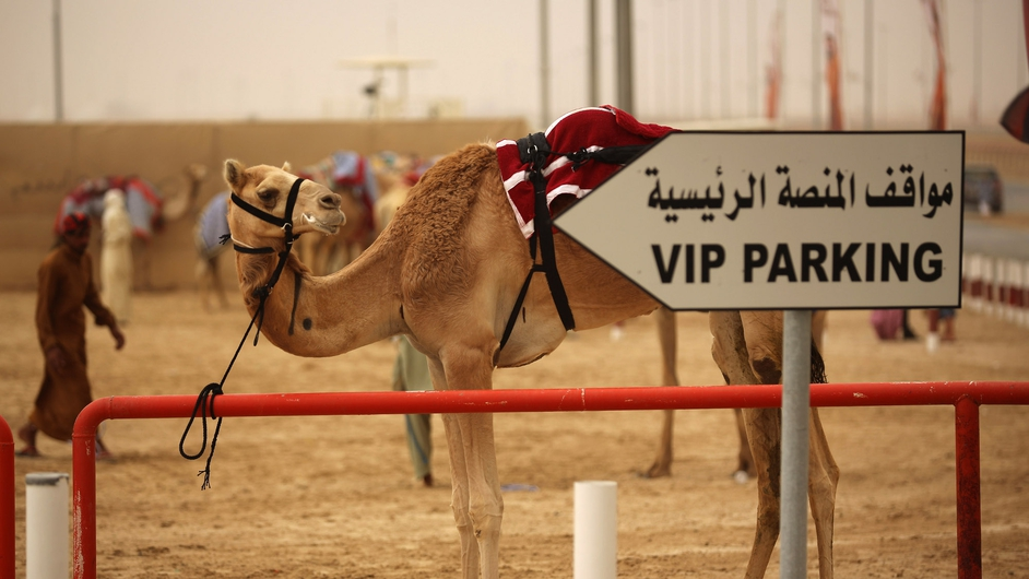 A camel is tethered to a railing after racing at Dubai Camel Racing Club during the Al Marmoum camel racing season