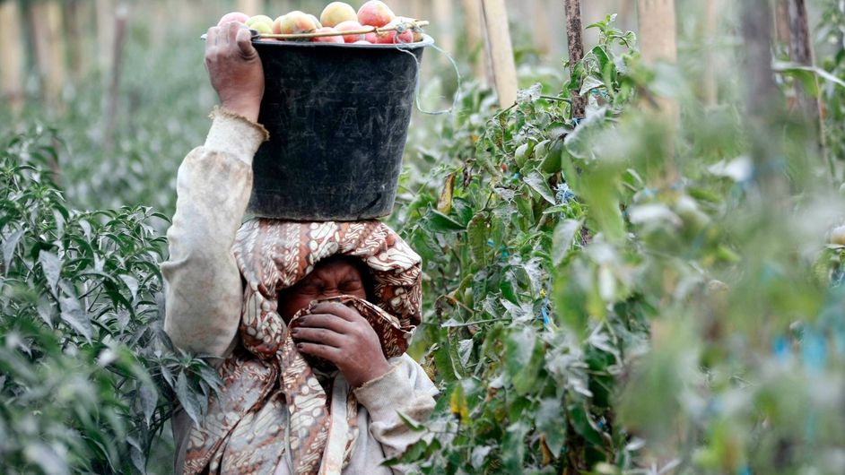 A farmer protects her face from the ash of the volcano as she collects tomatoes in a field