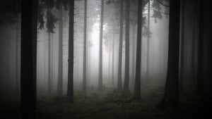 Thick fog glooms a forest on Feldberg mountain near Schmitten in Germany