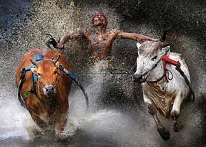 Pacu Jawi Bull Race, Indonesia (Wei Seng Chen, Malaysia)