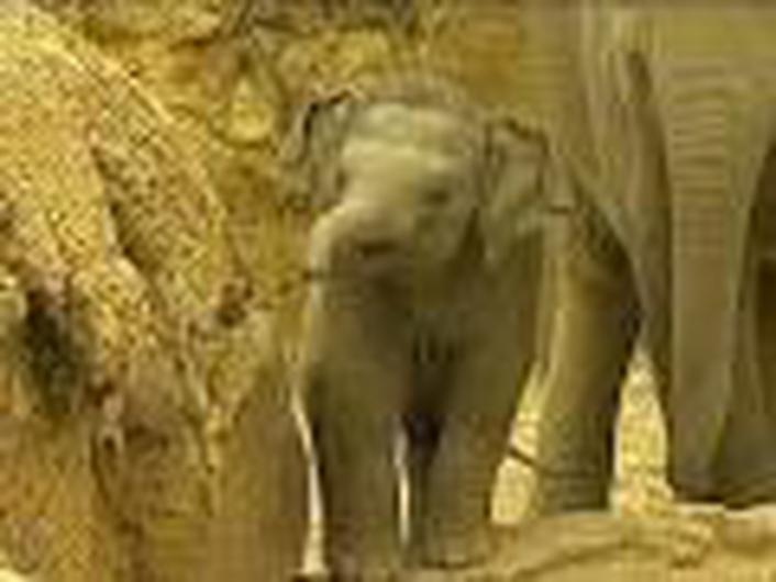 Elephants at Dublin Zoo