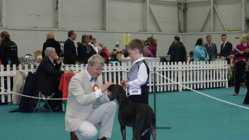 Ger judging at the dog show