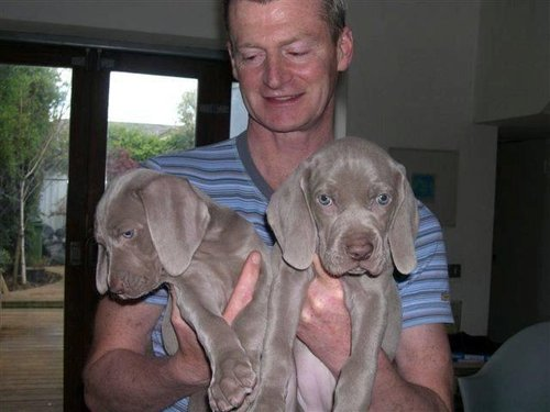 Ger holding puppies