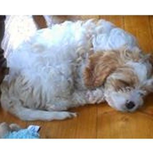 Dog killed by hunt