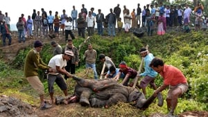 Indian forest officials along with villagers carry the carcass of an Asiatic wild elephant calf after it was killed by a train while walking with a herd towards a wetland area near Assam