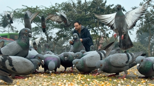 A man feeds birds in Delhi. Indian astrology says feeding an animal or bird associated with particular planets deflects the negative vibrations and ill-effects of those planets on you, thus the feeding of birds and animals becomes a way to change one's lu