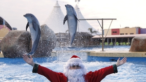 A man dressed as Santa Claus poses with dolphins jumping out of the water at the Marineland animal exhibition park in the French Riviera city of Antibes