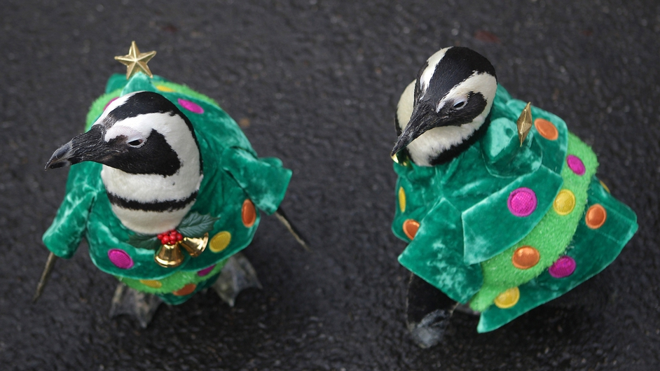 Penguins dressed in Christmas tree costumes are paraded at Everland, South Korea's largest amusement park