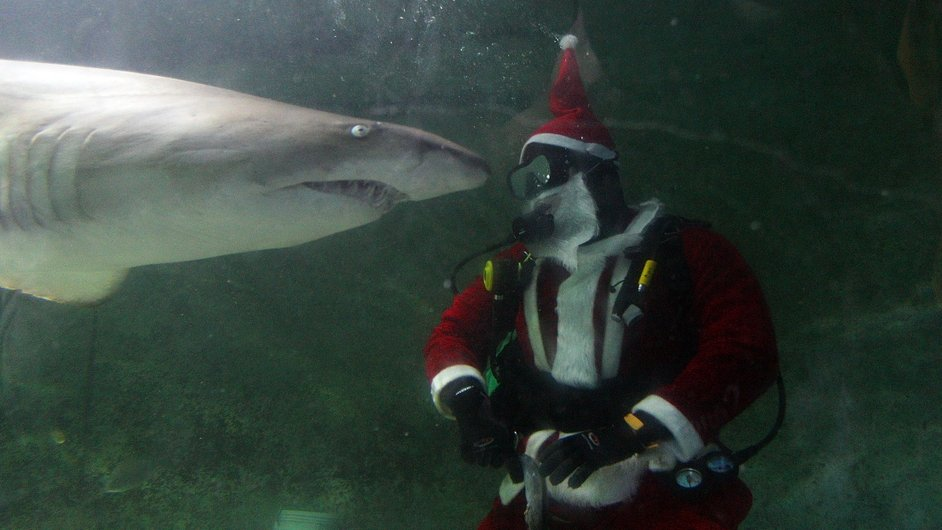 Santa Claus feeds a shark during a visit to the Manly SEA LIFE Sanctuary in Sydney, Australia