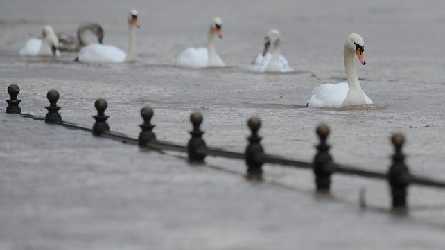 Swans swim through floodwater around the River Severn in Worcester, England