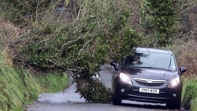 A motorist navigates past a fallen tree in north Antrim