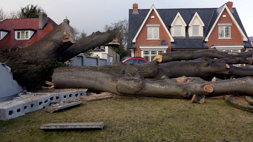 A tree which crashed through a neighbouring wall on the Howth Road in Dublin (Pic: Photocall/Laura Hutton)