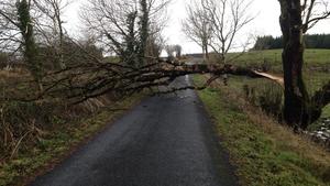 Tree felled by the storm at Tavrane, Kilkelly, Co Mayo (Pic: Malachy Egan)