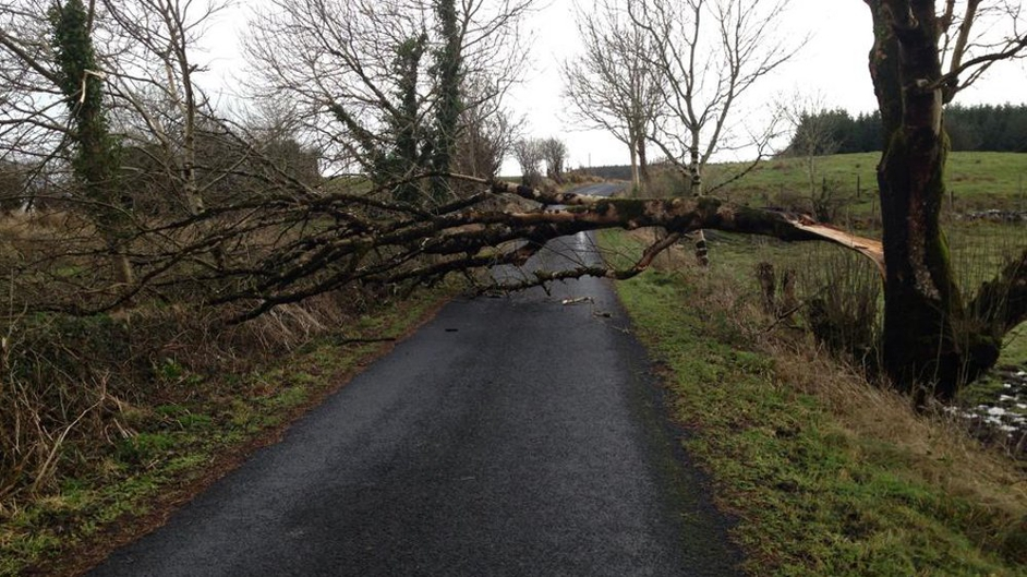 Tree felled by the storm at Tavrane, Kilkelly, Co Mayo (Pic: Malachy Egan)