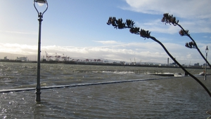 High tide at Clontarf promenade in Dublin (Pic: Patricia Bittmann)