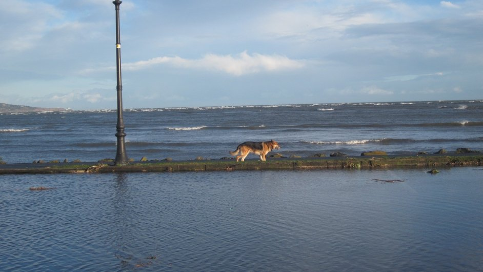 A dog cautiously makes his way along the footpath as the tide goes out at Sandymount (Pic: Petra Lelovska)