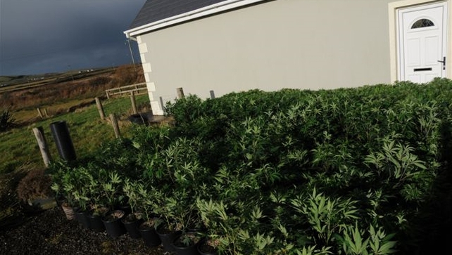 Some 600 cannabis plants have been seized at a house in Co Clare