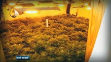 Gardaí in Clare discover cannabis grow house