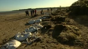 Portrane beach is one of those affected