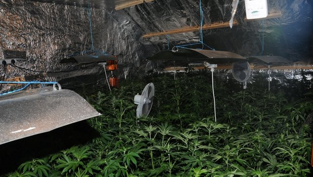 Some 200 cannabis plants were found at a house in Lislanahan, Kilkee