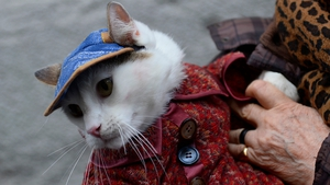 A cat owner queues with her pet to have it blessed by a priest at San Anton church in Madrid
