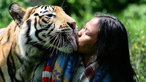 Abdullah Sholeh kisses Mulan Jamilah, a six-year-old Bengal tiger, in the garden beside their home in Indonesia. The tiger and her minder are said to be inseparable