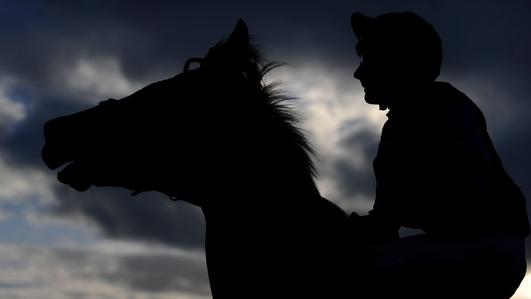 Horses to China
