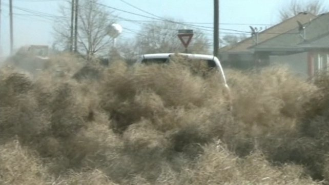 Clovis residents are calling it the tumbleweed invasion of 2014
