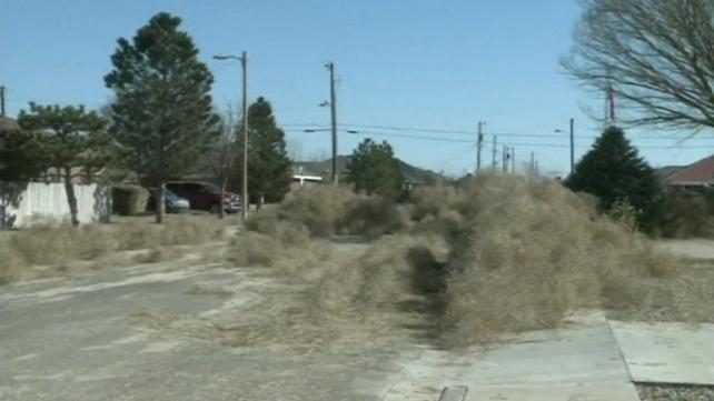 Tumbleweed blocked roads and buried houses
