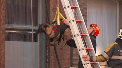 Emergency services hoisted search rescue dogs into the building