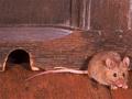 Mice Prefer Sligo And Longford!
