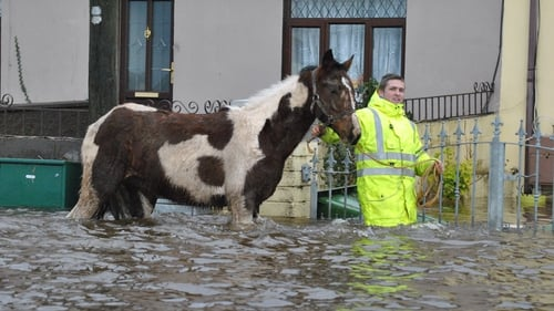 A horse is led to dry land in St Mary's Park in Limerick (Pic: Michael Cantillon)