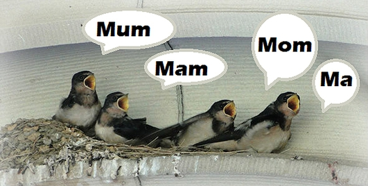 Mammy, Ma, Mum or Mother