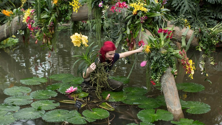Horticulturalist Ellie Biondi arranges plants in the new exhibition 'Orchids' at the Royal Botanic Gardens, Kew, England