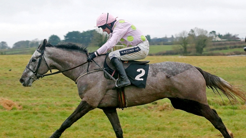 Ballycasey is one of three runners for Willie Mullins in the Growise Champion Novice Chase
