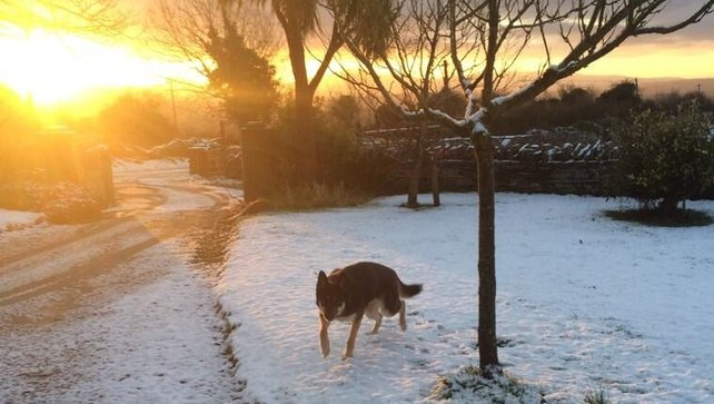 A dog making the most of the snow in Co Kilkenny (Pic: Cliadhna Whitely)