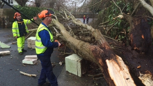Workers clear a fallen tree in Co Waterford