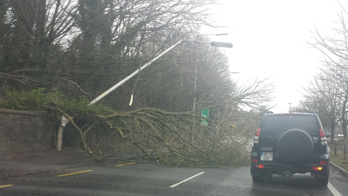 A tree blocking the road on the approach to the Dunkettle Roundabout in Cork (Pic: Darren Dunne)