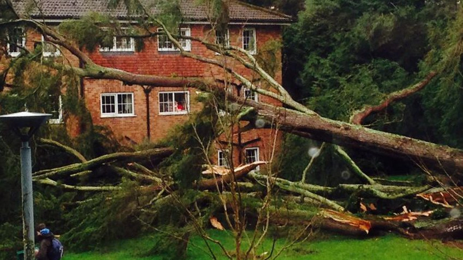 A tree is down at Brookfield student accommodation in Cork (Pic: Laura Leahy)