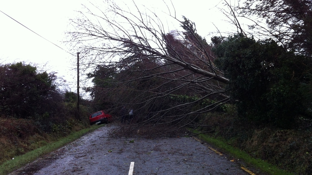 A tree is blocking the road at Ardfert in Tralee (Pic: Adrian O'Gara)