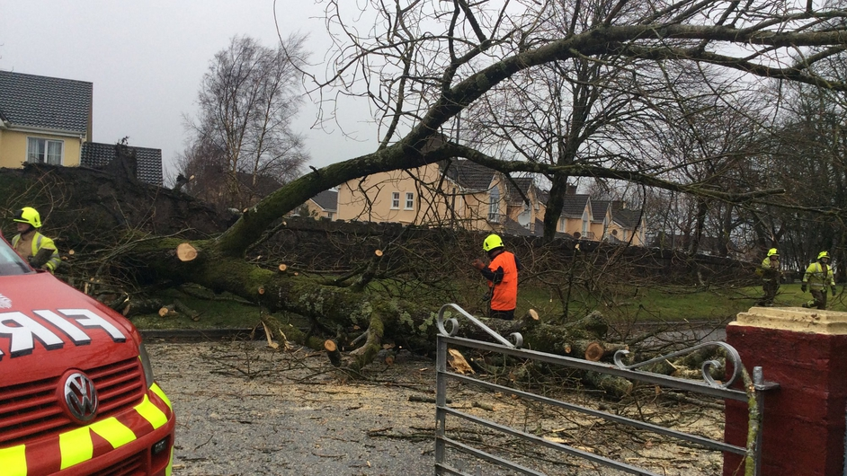 Emergency services are dealing with trees down across the country (Pic: Mary Cashin)
